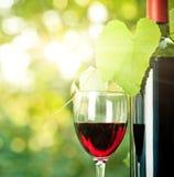 Botella de vino rojo, un vidrio y vid joven foto de archivo libre de regalías