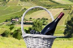 Botella de vino rojo y de viñedo Foto de archivo