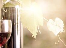 Botella de vino rojo y primer de la vid imagen de archivo libre de regalías