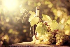 Botella de vino y uvas de la vid foto de archivo
