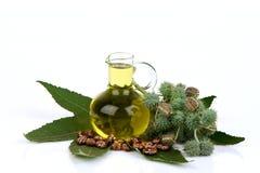 Botella del aceite de ricino con las frutas, las semillas y la hoja del echador fotografía de archivo libre de regalías