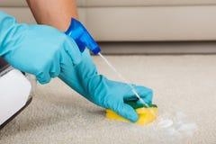 Botella del espray de Person Cleaning Carpet With Detergent Imágenes de archivo libres de regalías