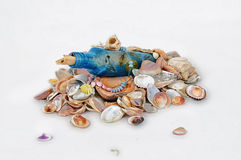 Botella en conchas marinas Foto de archivo