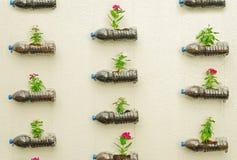 Botella plástica de flores Imagen de archivo