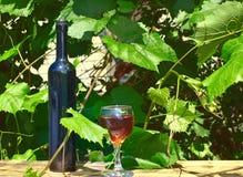 Botella y copa de vino contra un viñedo Fotografía de archivo libre de regalías
