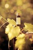 Botella y vid de vino imágenes de archivo libres de regalías
