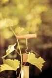 Botella y vid de vino fotografía de archivo