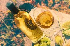 Botella y vidrio lleno de vino blanco sobre fondo del viñedo Wi foto de archivo