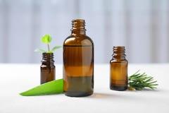 Botellas con aceites esenciales e hierbas frescas Imágenes de archivo libres de regalías