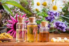 Botellas de aceite esencial con el echinacea, manzanilla, lavanda imagen de archivo libre de regalías