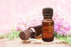 Botellas de aceite esencial con las hierbas y las flores de la milenrama imagen de archivo libre de regalías