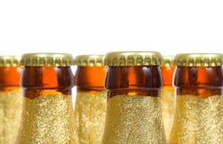Botellas de cerveza Foto de archivo libre de regalías