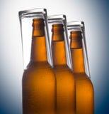 Botellas de cerveza aisladas en el fondo del color, aún-vida del estudio Fotografía de archivo libre de regalías