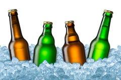 Botellas de cerveza en el hielo Imagen de archivo libre de regalías