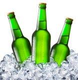 Botellas de cerveza en los cubos de hielo Foto de archivo