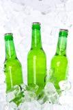 Botellas de cerveza verdes Fotografía de archivo libre de regalías