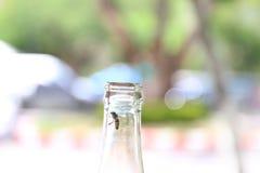 Botellas de cristal, conservadas con la mosca de abeja en el rasguño de soda de la ligamaza de la consumición en fondo verde del  Imagen de archivo libre de regalías