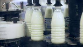 Botellas de leche de la marca en la fábrica de la comida Sector lechero Planta de comida Fábrica de la leche metrajes