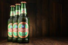 Botellas del árbol de cerveza de Tsingtao imagen de archivo libre de regalías