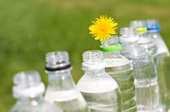 Botellas del ANIMAL DOMÉSTICO, Fotografía de archivo libre de regalías