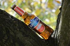 Botellas del ejemplo de cerveza no alcohólica en naturaleza de un árbol Fotos de archivo libres de regalías