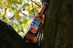 Botellas del ejemplo de cerveza no alcohólica en naturaleza de un árbol Imagen de archivo