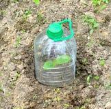 Botellas plásticas Fotos de archivo