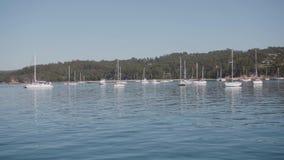 Boten in de Haven, Eden, Australië stock video