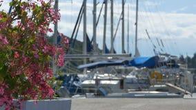 Boten en Bloemen in de Haven stock footage