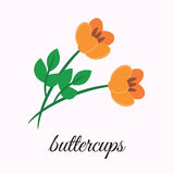 boterbloemen Stock Afbeelding