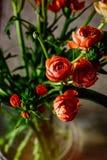 boterbloemen stock fotografie