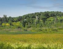 Boterbloemen en landbouwgrond Stock Afbeeldingen