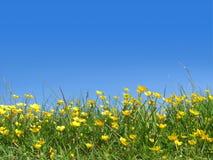 Boterbloemen op gebied Royalty-vrije Stock Afbeelding
