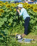 Photographing a Giant Sunflower Stock Photos
