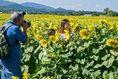 Photographer, Woman and Sunflowers Stock Photos