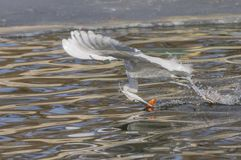 Egrets and herons Stock Photos