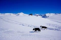 BOTH DOGS MOUNTAIN Stock Photos