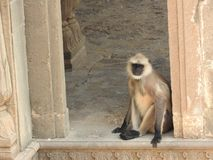 Both are in the famous stepwell Chand Baori well in the village of Abhaneri, Rajasthan, India