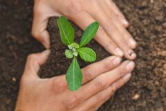 Free Both Hands Are Protecting The Growing Tree Concept Of Environmental Protection By Planting Trees Earth Day Environment Day, Earth Stock Image - 184213461