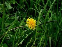 Bothanical Garden. A cute yellow flower from Garden stock photos