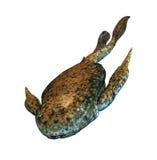 Bothriolepis - förhistorisk fisk Arkivfoton