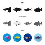 Botia, clown, piranha, cichlid, hummingbird, guppy,Fish set collection icons in black, flat, monochrome style vector. Symbol stock illustration Royalty Free Stock Photography