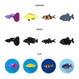 Botia, clown, piranha, cichlid, hummingbird, guppy,Fish set collection icons in cartoon,black,flat style vector symbol. Stock illustration Royalty Free Stock Photo