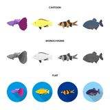 Botia, clown, piranha, cichlid, hummingbird, guppy,Fish set collection icons in cartoon,flat,monochrome style vector. Symbol stock illustration Stock Photography