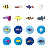 Botia, clown, piranha, cichlid, hummingbird, guppy,Fish set collection icons in cartoon,flat style vector symbol stock. Illustration Stock Images