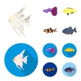Botia, clown, piranha, cichlid, hummingbird, guppy,Fish set collection icons in cartoon,flat style vector symbol stock. Illustration Royalty Free Stock Images