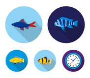 Botia, clown, piranha, cichlid, hummingbird, guppy,Fish set collection icons in flat style vector symbol stock. Illustration Stock Photo