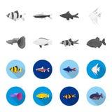 Botia, clown, piranha, cichlid, hummingbird, guppy,Fish set collection icons in monochrome,flat style vector symbol. Stock illustration Stock Photos