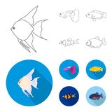 Botia, clown, piranha, cichlid, hummingbird, guppy,Fish set collection icons in outline,flat style vector symbol stock. Illustration Royalty Free Stock Image