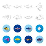 Botia, clown, piranha, cichlid, hummingbird, guppy,Fish set collection icons in outline,flat style vector symbol stock. Illustration Stock Photos